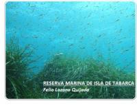 Pradera de Posidonia oceanica en Tabarca
