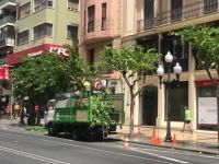 Campaña de poda de las copas de los árboles en la Rambla