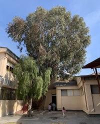 Algunos de los árboles cuyas raíces y ramas dañan las instalaciones
