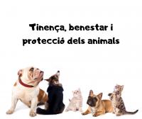 Tinença, benestar i protecció dels animals