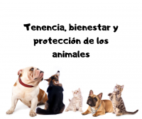 Tenencia, bienestar y protección de los animales
