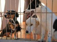 Algunos de los perros pendientes de ser adoptados