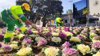 Reposición de flores en la Avenida de Salamanca