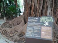 Árboles singulares Alicante