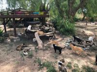 Felinos en el albergue de Alicante
