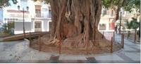 Vallado Ficus