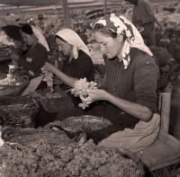 Treballadores del camp, 1951. Foto Sánchez. AMA