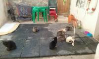 Colonia de gatos en Tabarca